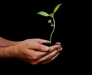 growth..seedling