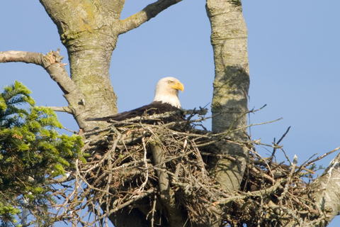 """Eaglet--""""I don't like this nest anymore. I wanna be me. I know I can fly."""""""